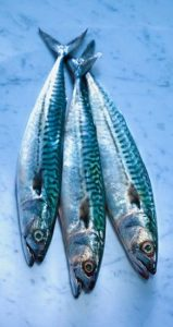 blu fish